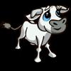 Tuscan Calf 托斯卡納小牛