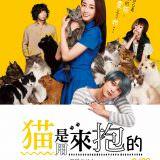Movie, 猫は抱くもの(日本, 2018) / 貓是用來抱的(台灣) / The Cat in Their Arms(英文) / 猫是要抱着的(網路), 電影海報, 台灣
