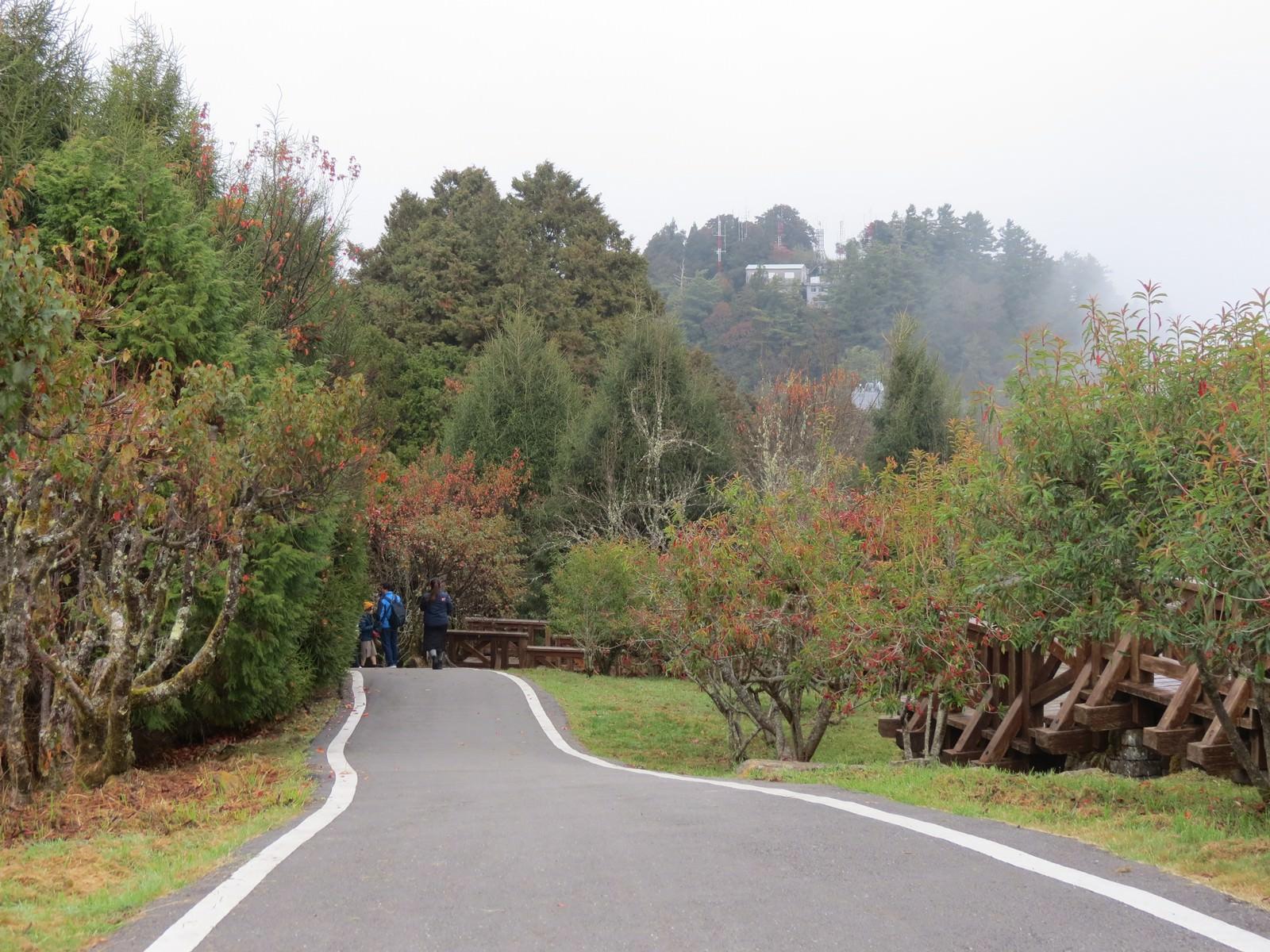 阿里山林業鐵路(森林小火車), 小笠原山觀景台