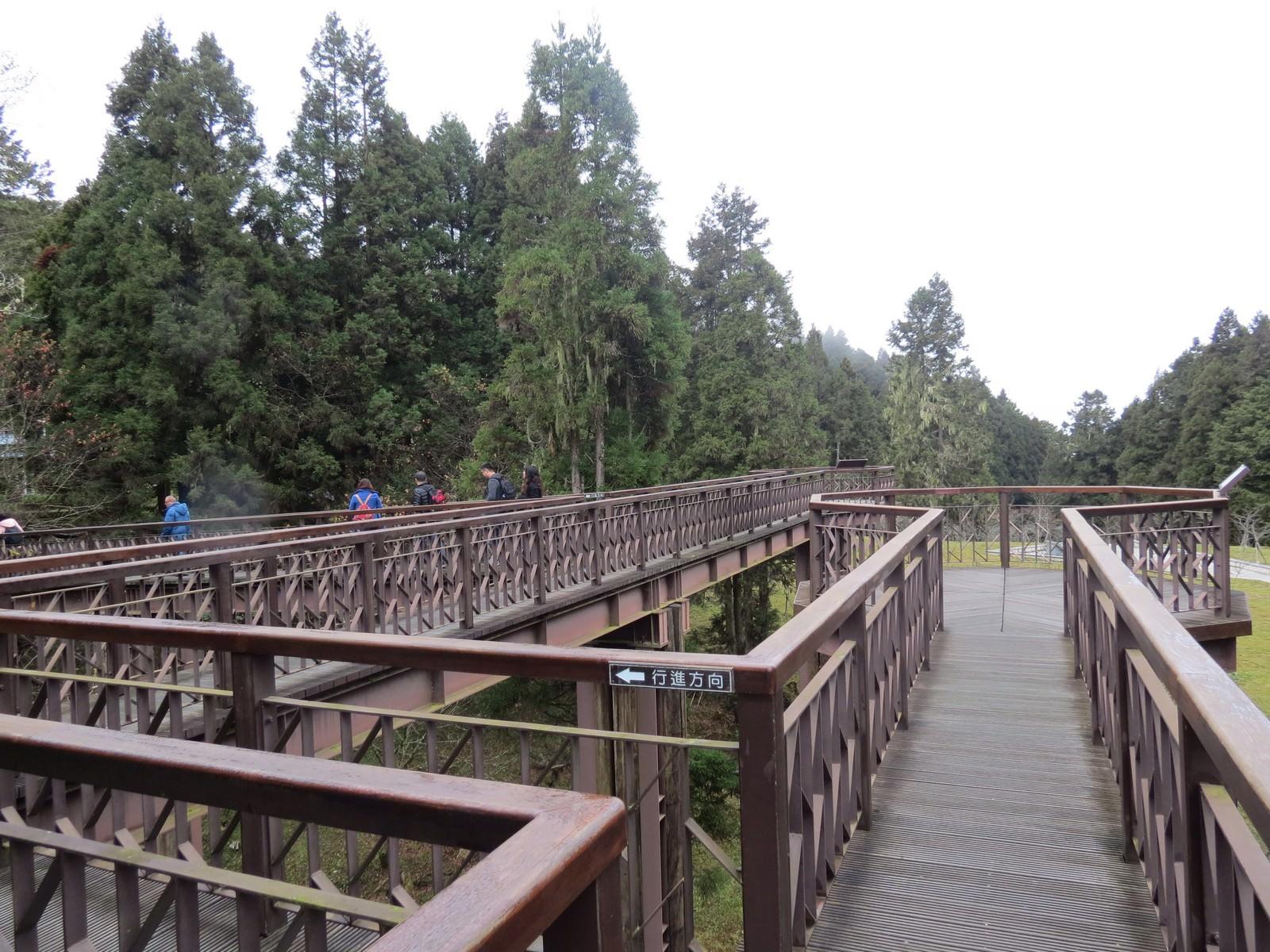 阿里山國家風景區, 沼平公園, 櫻之道