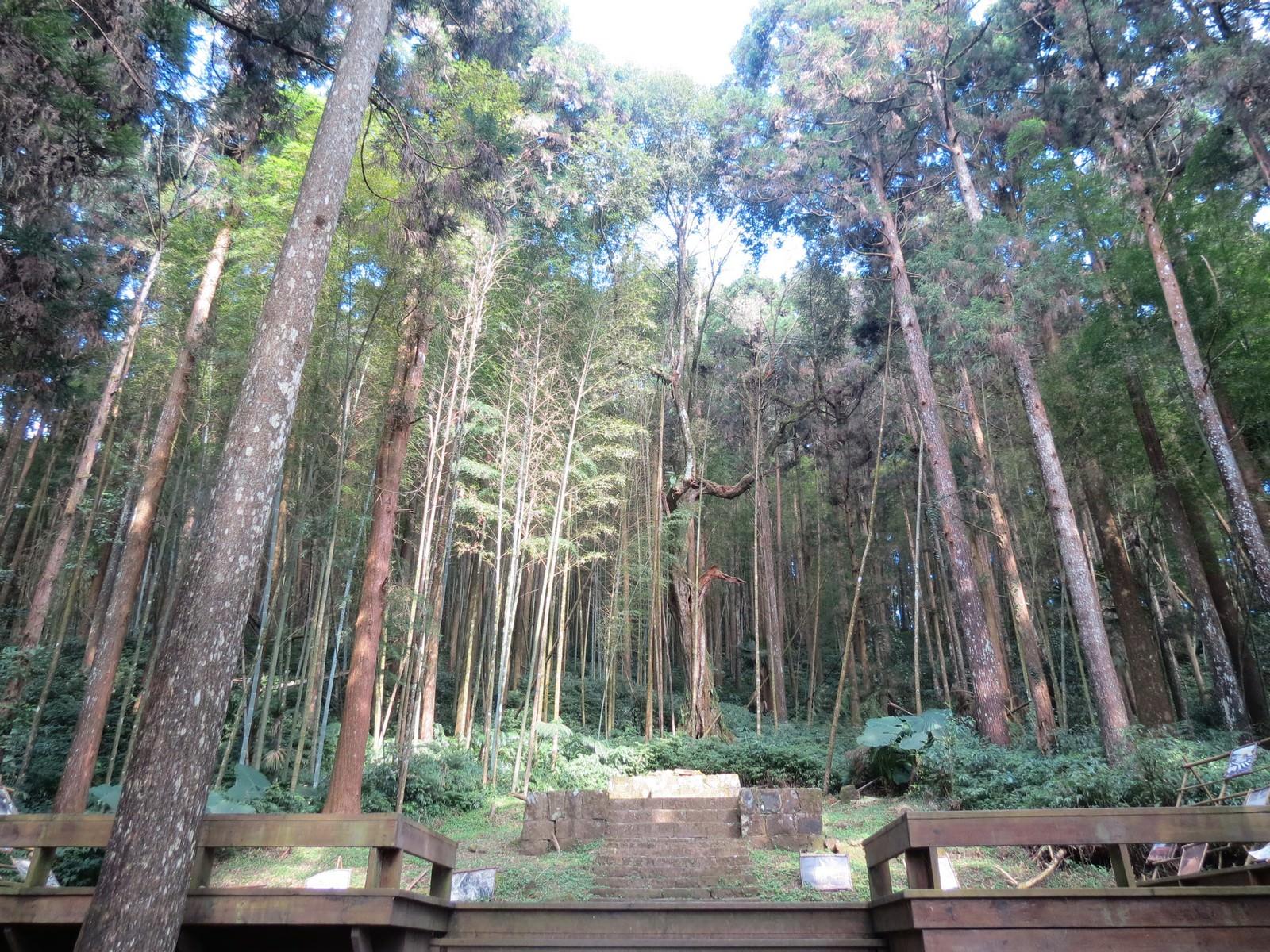 奮起湖神社遺跡, 環境
