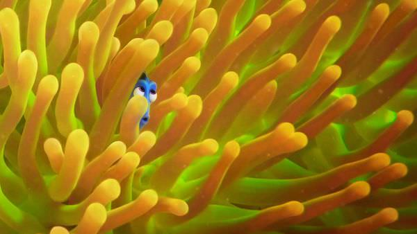 FindingDory04