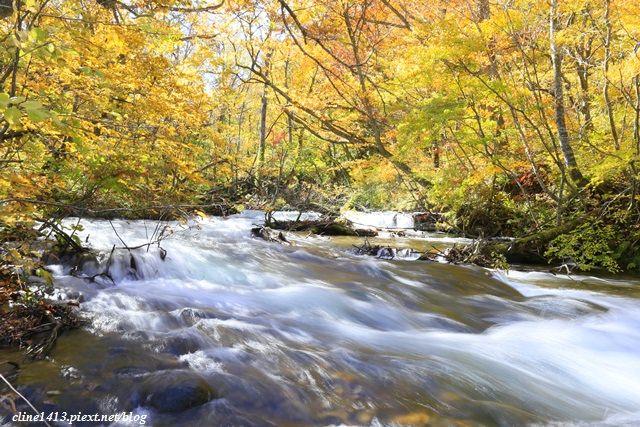 ▌日本東北賞楓▌絕美賞楓景點♥奧入瀨溪流散策♥彷彿走進畫布裡的美景
