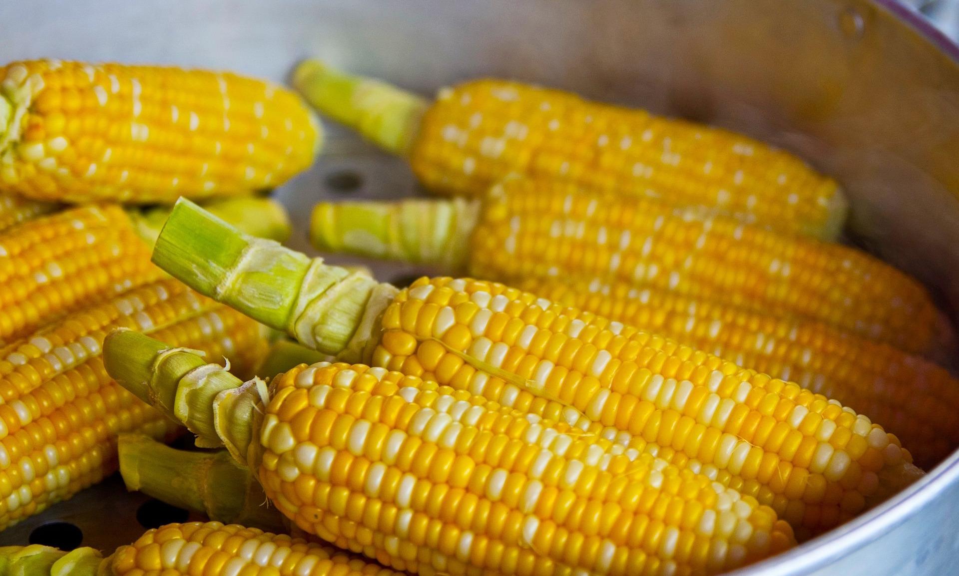 「煮玉米要用冷水還是熱水下鍋?」難怪玉米會又老又硬,教你讓玉米更鮮嫩好吃的做法!