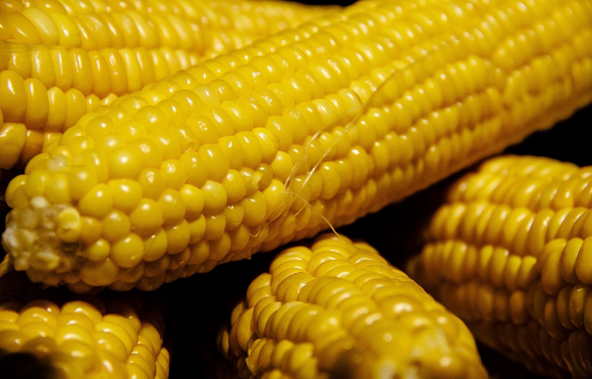 「微波爐竟然能煮玉米?」 3 種玉米快速煮法,教你煮出玉米的香甜可口