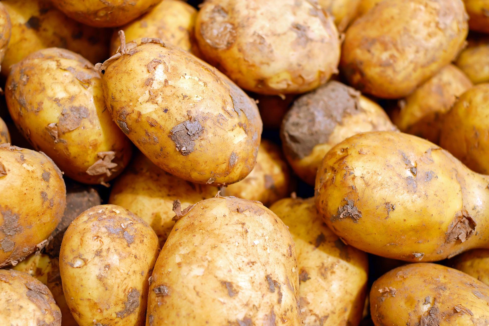 「馬鈴薯跟蘋果放在一起,可以延緩發芽?」容易發芽的食材要這樣保存才正確!
