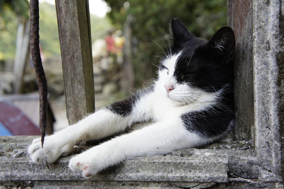 【貓奴▕ 基礎股息篇】5 分鐘『高殖利率』懶人包!