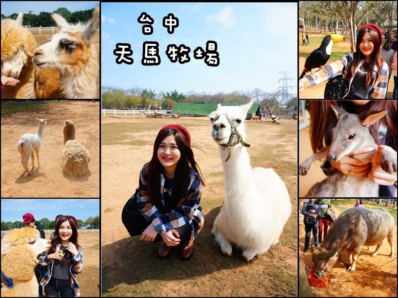 【台中外埔】天馬牧場 – 小孩的動物樂園 看草泥馬超可愛!羊駝
