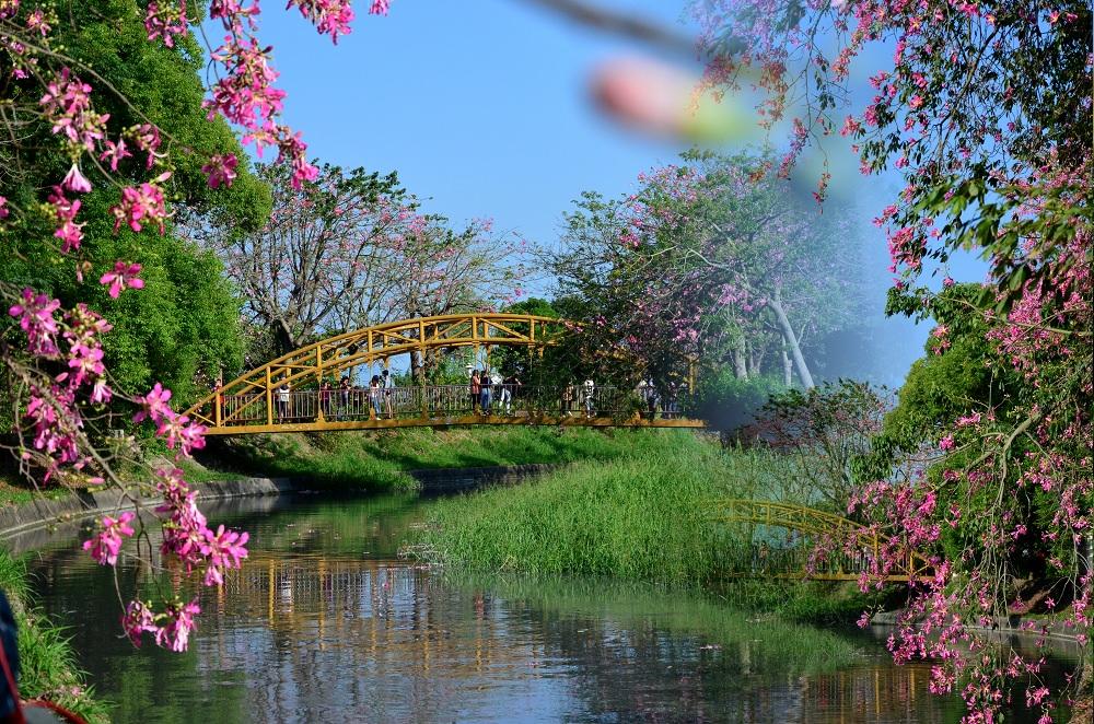 北斗景點_北斗河濱公園│美人樹與欒樹爭奇鬥艷,打造最浪漫的秋冬美景。