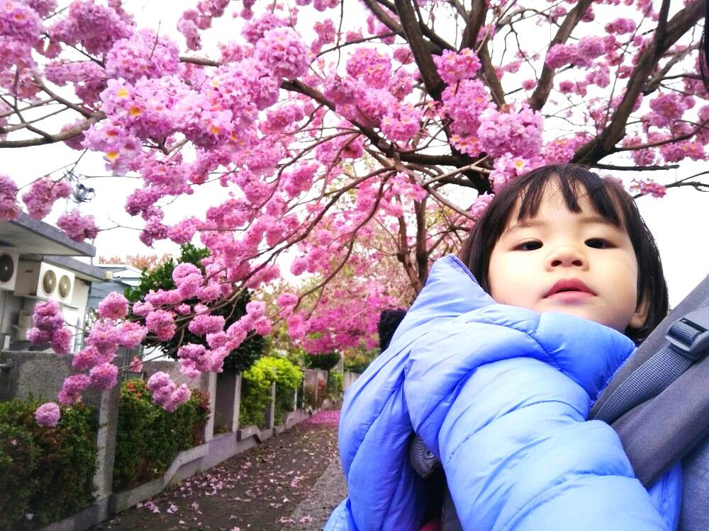 社頭景點-崙雅國小|媲美櫻花的紅花風鈴木,打造出屬於自己浪漫的頁面吧!