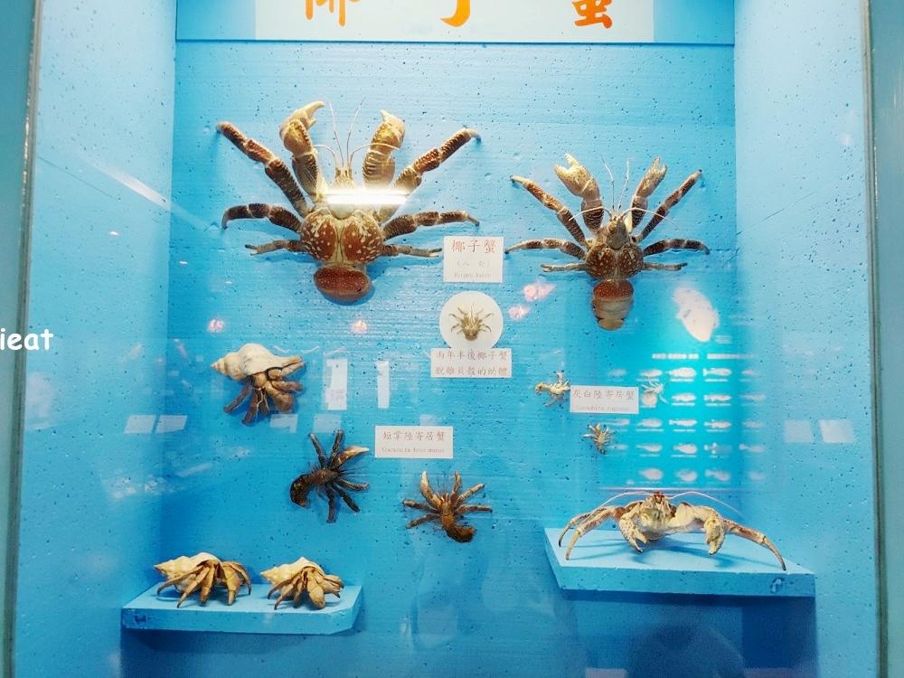 竹灣螃蟹博物館 澎湖親子景點 澎湖景點