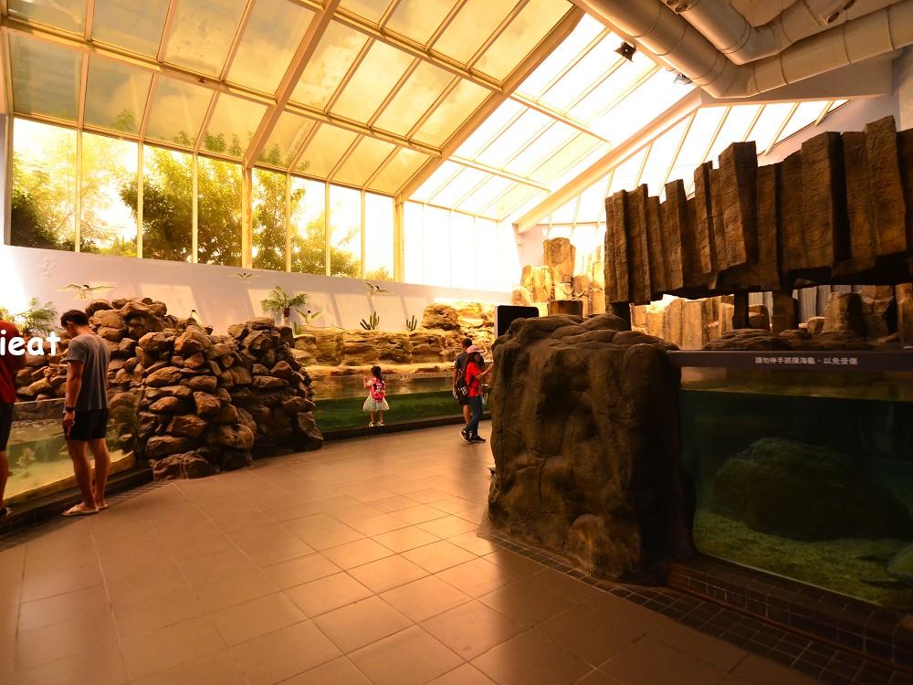 澎湖水族館 澎湖室內景點 澎湖親子景點 澎湖室內親子景點 西嶼景點