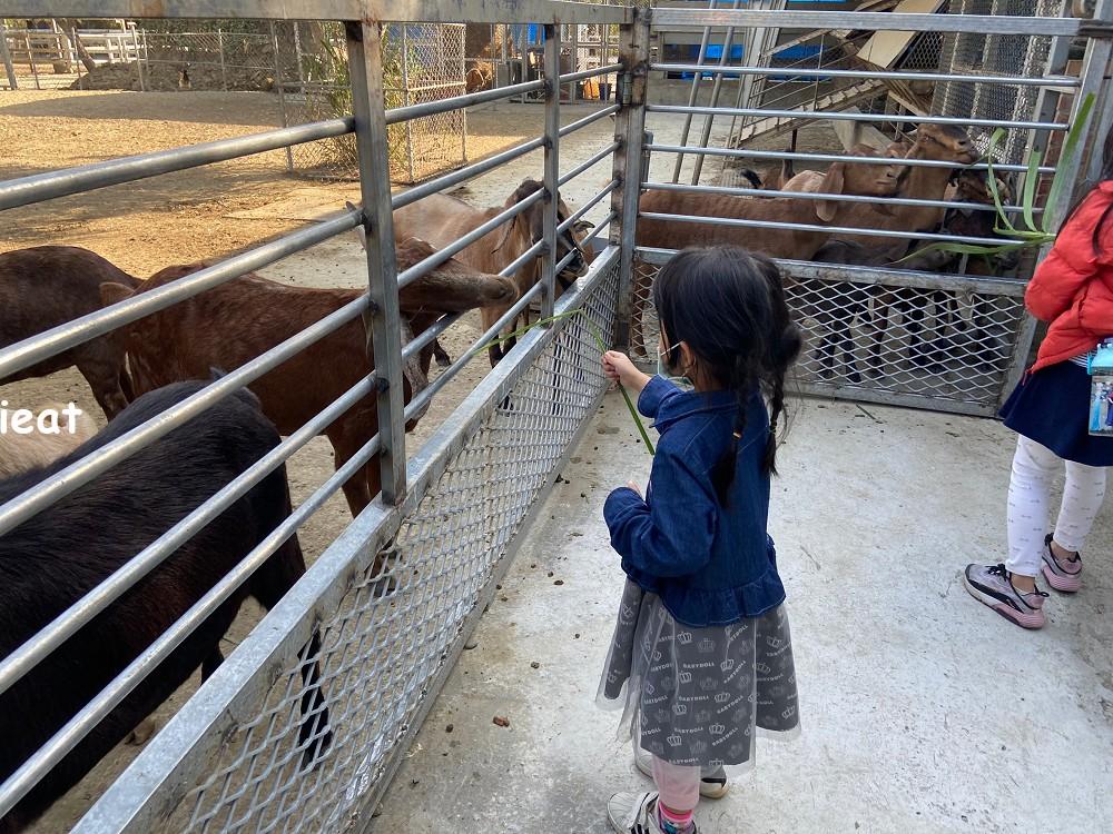 樹谷農場 台南親子景點 南部親子景點 南部農場 台南牧場 台南農場