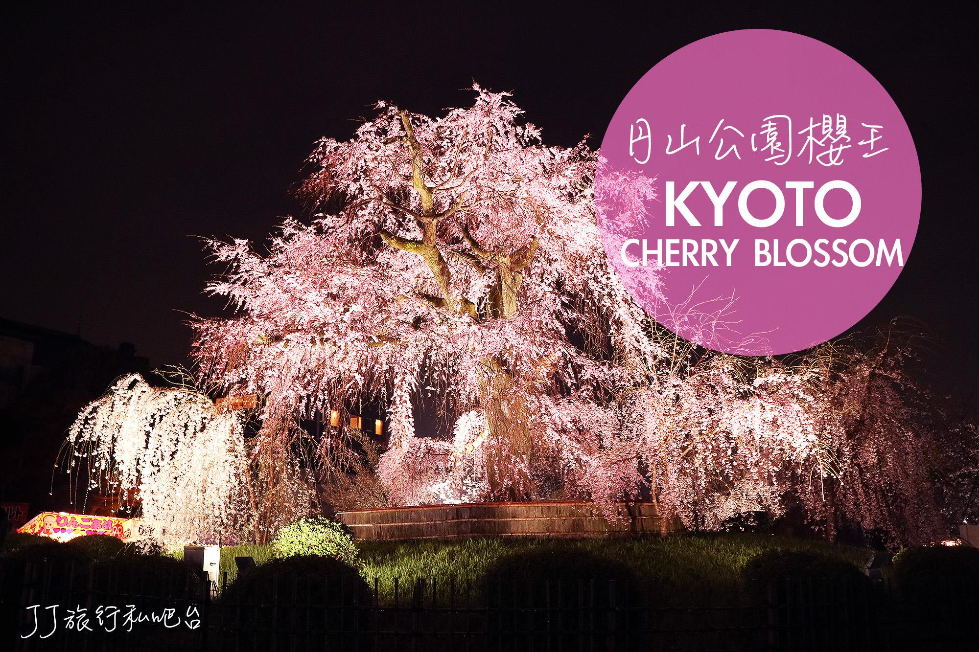 日本|關西京都賞櫻推薦!八阪神社円山公園櫻王,不能錯過的夜櫻景點