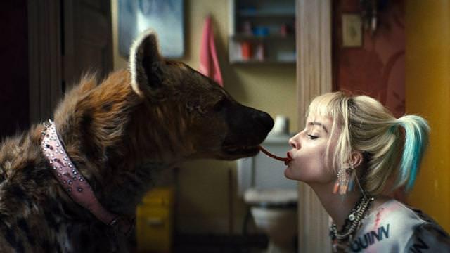 鬣狗有多厲害?5 個原因讓你知道「為什麼小丑女會把鬣狗當寵物」—《猛禽小隊:小丑女大解放》—我們用電影寫日記