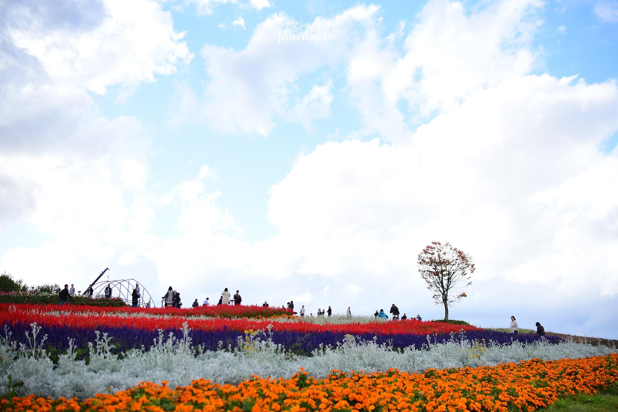 北海道景點,美瑛,花海,北海道賞花,秋天,四季彩之丘