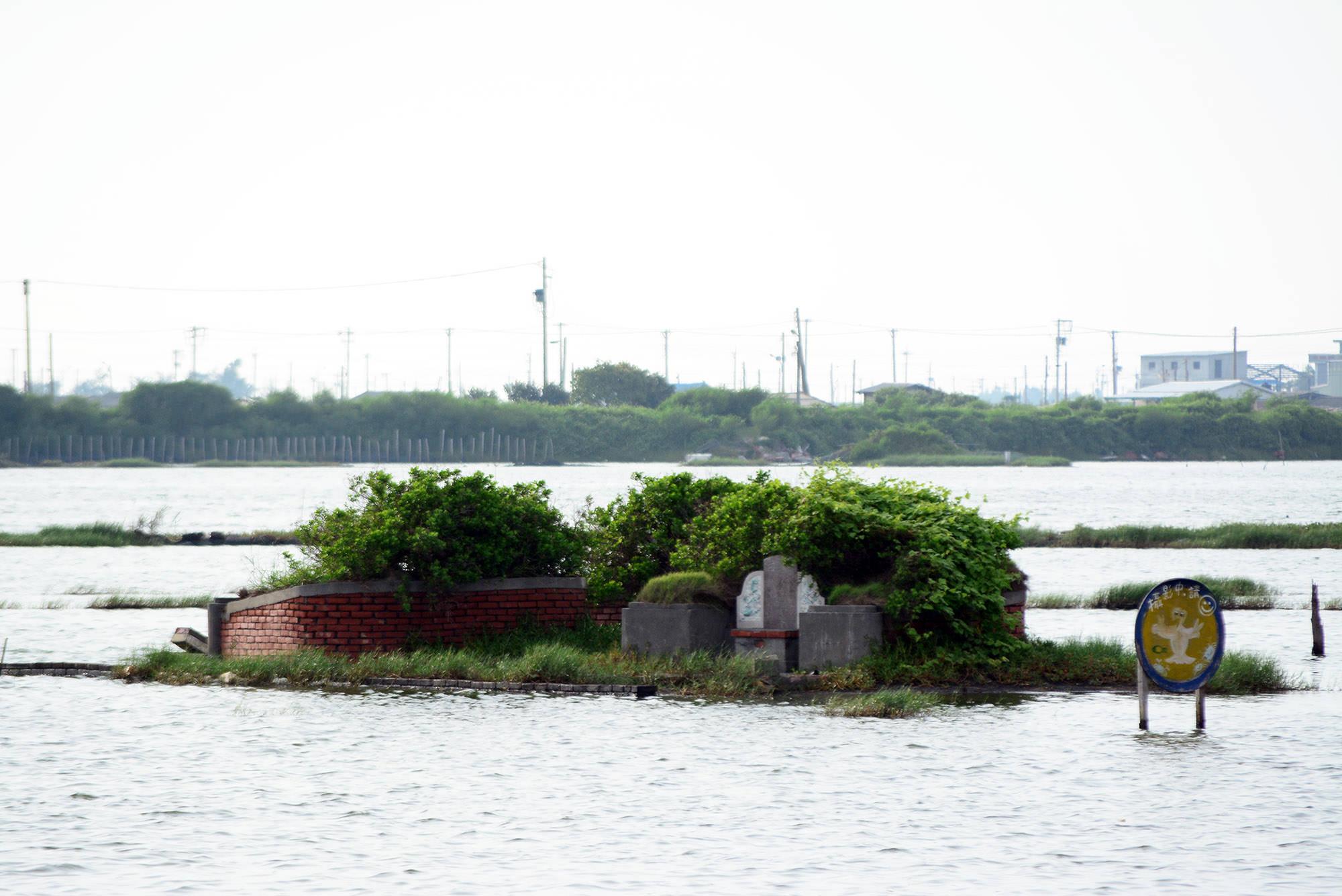 雲林,口湖,四湖,成龍濕地