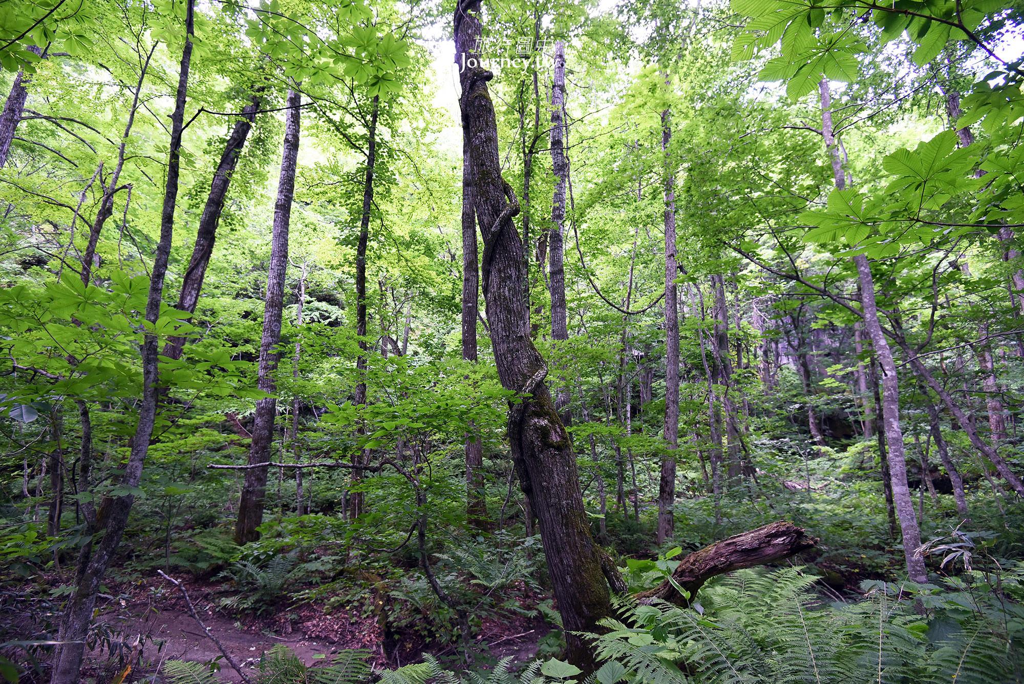 日本,青森,景點,十和田,奧入瀨溪流,散策,瀑布,苔蘚,森林