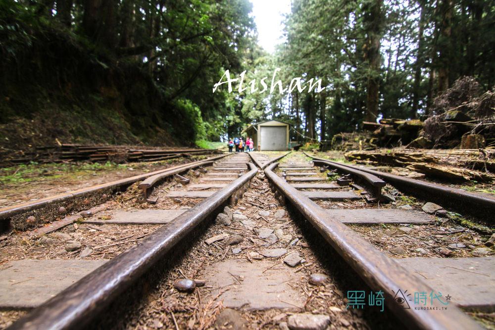 阿里山景點推薦 山水巨木步道散策去
