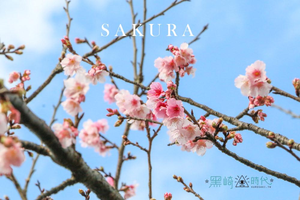 台北櫻花私房秘境 平菁街 42 巷 讓我們凝視春天