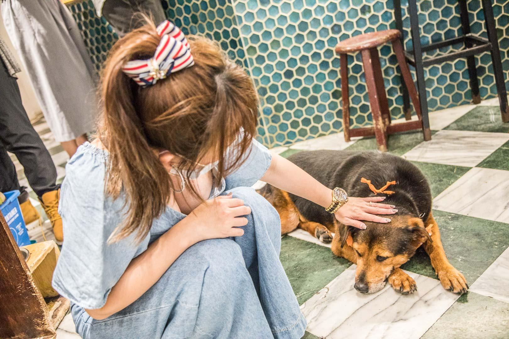浪浪別哭-台北店/領養不棄養,讓我陪你等家,為可愛的浪浪們盡一份棉薄之力,最有愛的流浪動物中途餐廳
