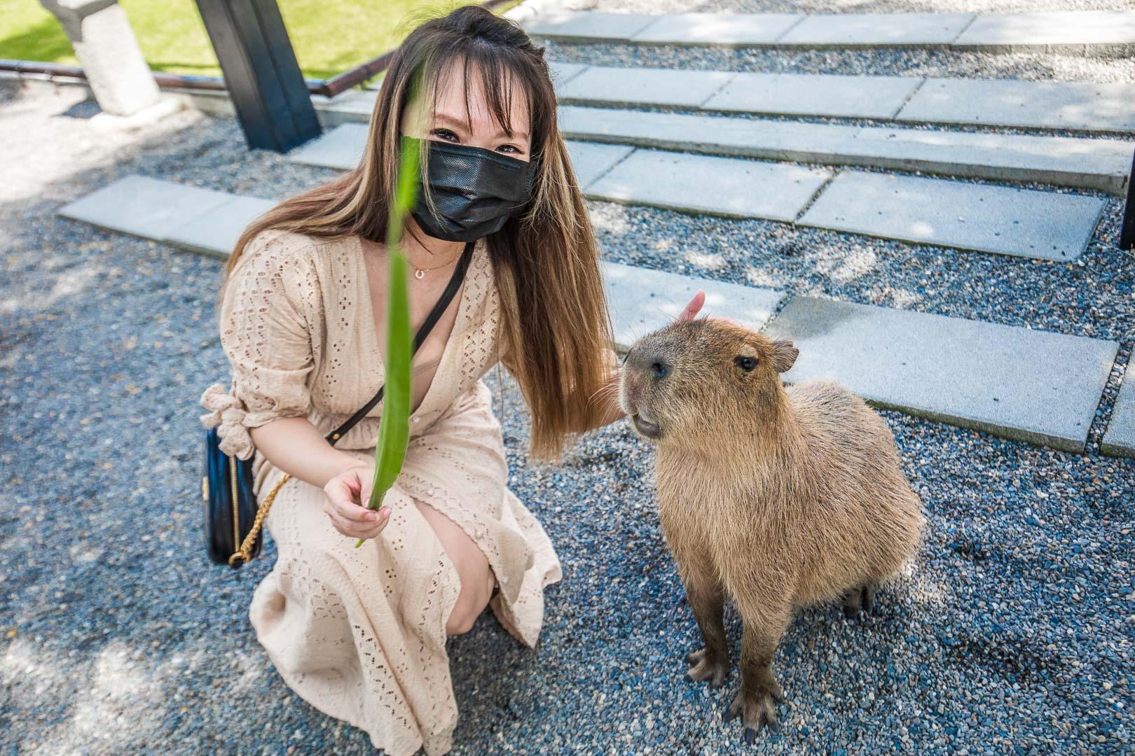 [宜蘭景點]張美阿嬤農場/最萌的動物農場!萌到你內心深處超可愛水豚君!好想養一隻!
