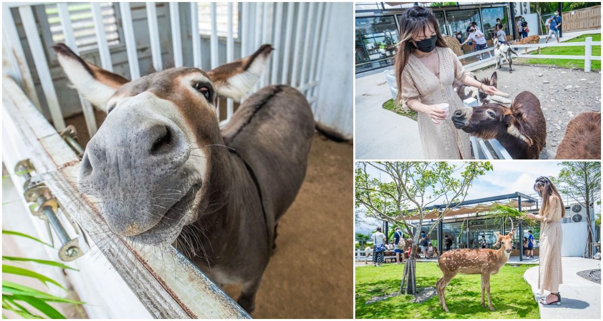 宜蘭景點 》星寶鄉間小路|超可愛小驢農場,史瑞克電影裡的迷你驢!