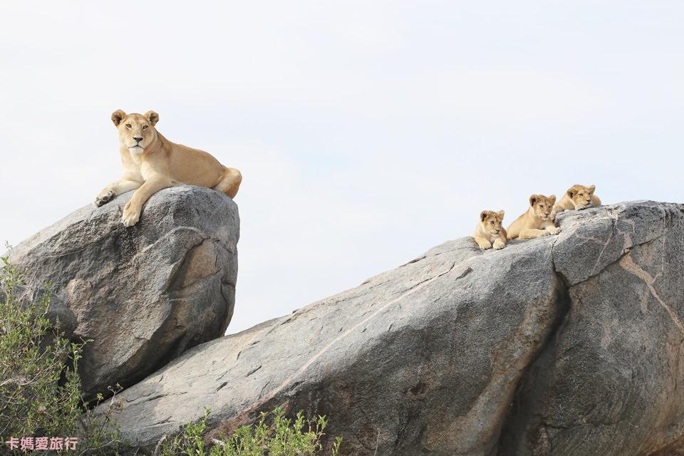 [坦尚尼亞]  Tanzania Central Serengeti Safari – 中部塞倫蓋提國家公園獵遊行程、拜訪Nyumbani營地紀錄 (上)
