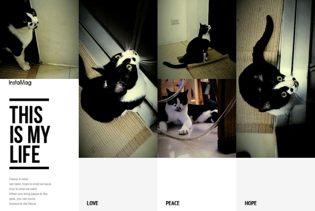 墨墨貓的寫真集