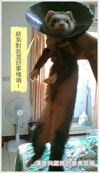 【寵物貂】毛孩子成長日記─養貂兩三事 - nurseilife.cc