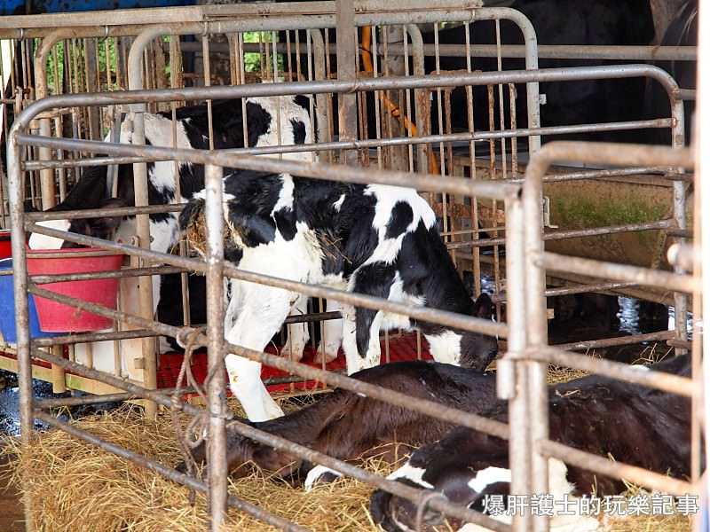 隱藏在牧場的世間濃牛奶冰棒 彰化福寶【豪泉畜牧場】 - nurseilife.cc