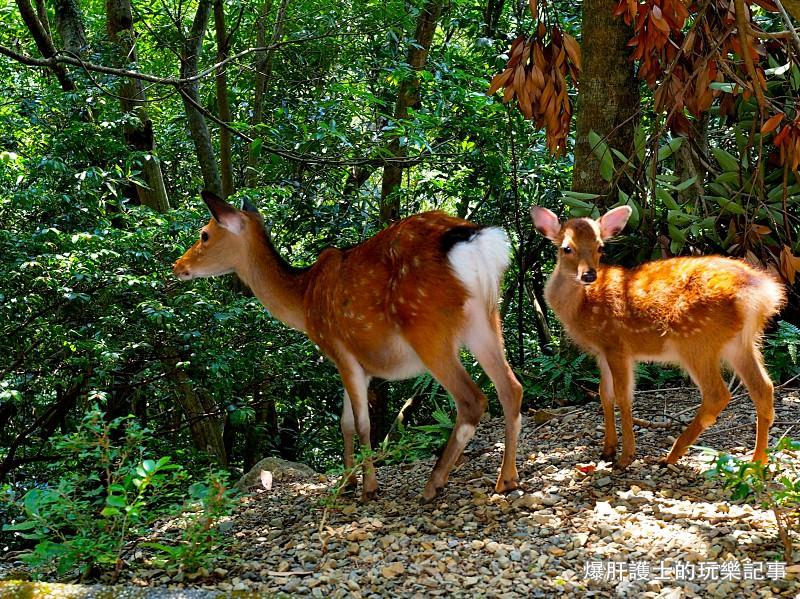 【屋久島】有小鹿斑比出沒的西部林道 登錄為世界遺產的海岸線 - nurseilife.cc