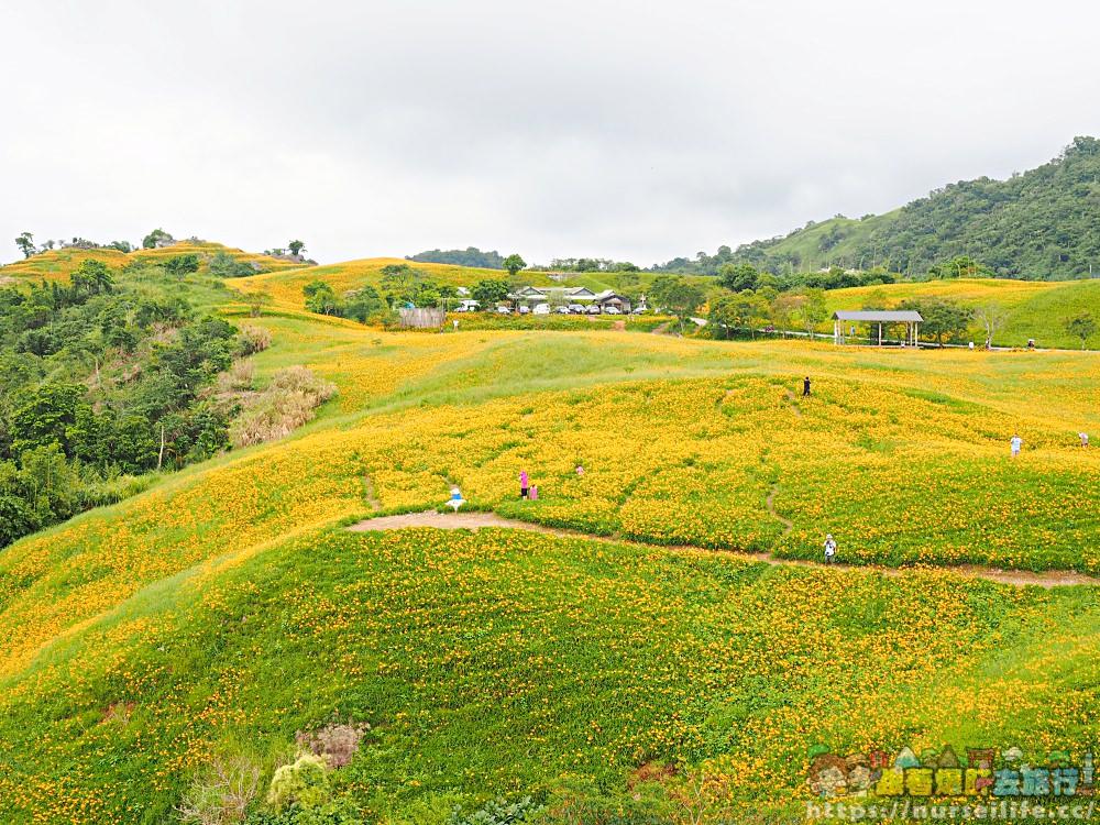 花蓮、富里|六十石山.在天空之城一覽被染黃的大地 - nurseilife.cc