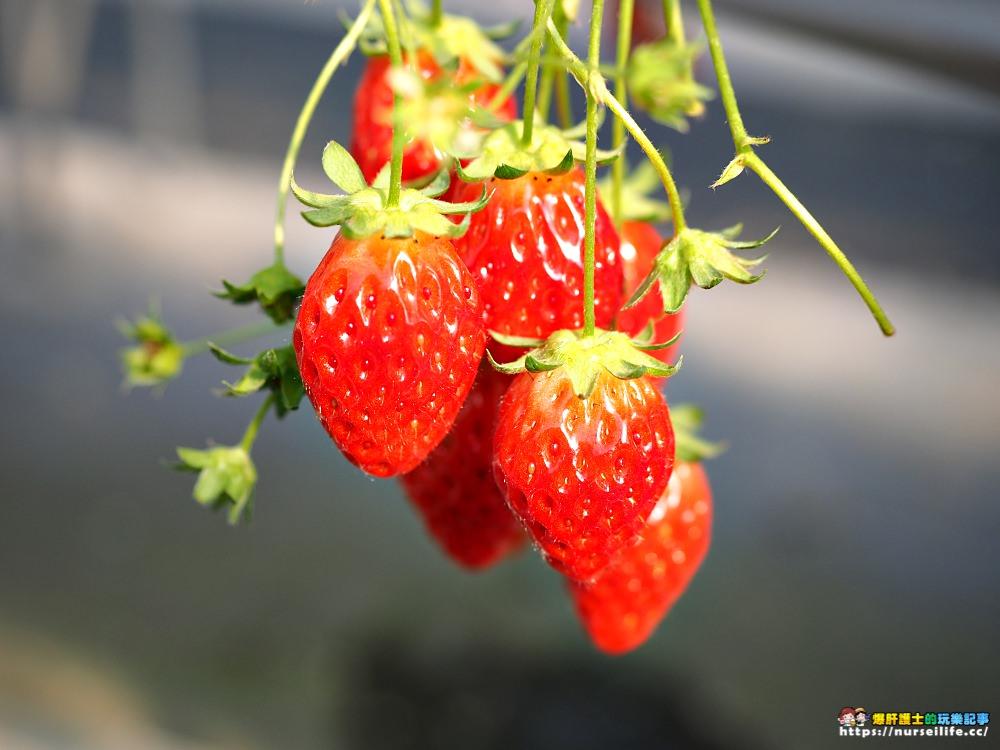 愛知、半田 澤田農園.現採現吃日本採草莓吃到飽體驗 - nurseilife.cc