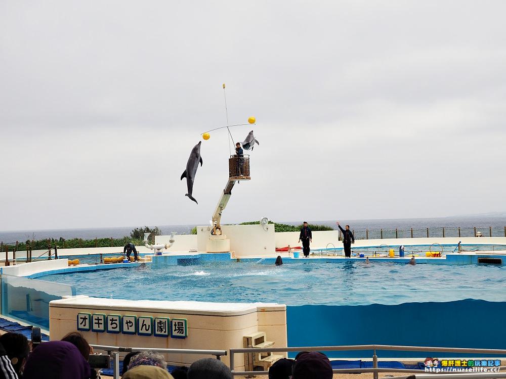 沖繩|美麗海水族館(沖縄美ら海水族館).如果沒來是不是少了些什麼? - nurseilife.cc