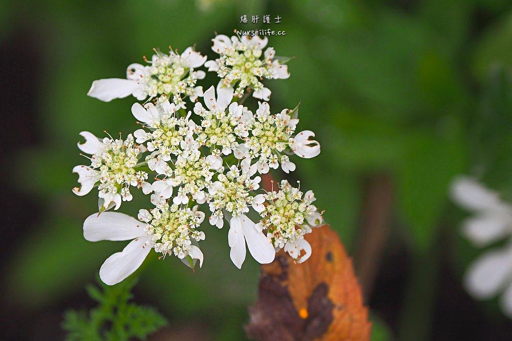 北海道、富良野|風之花園.森林裡的英式花園 - nurseilife.cc