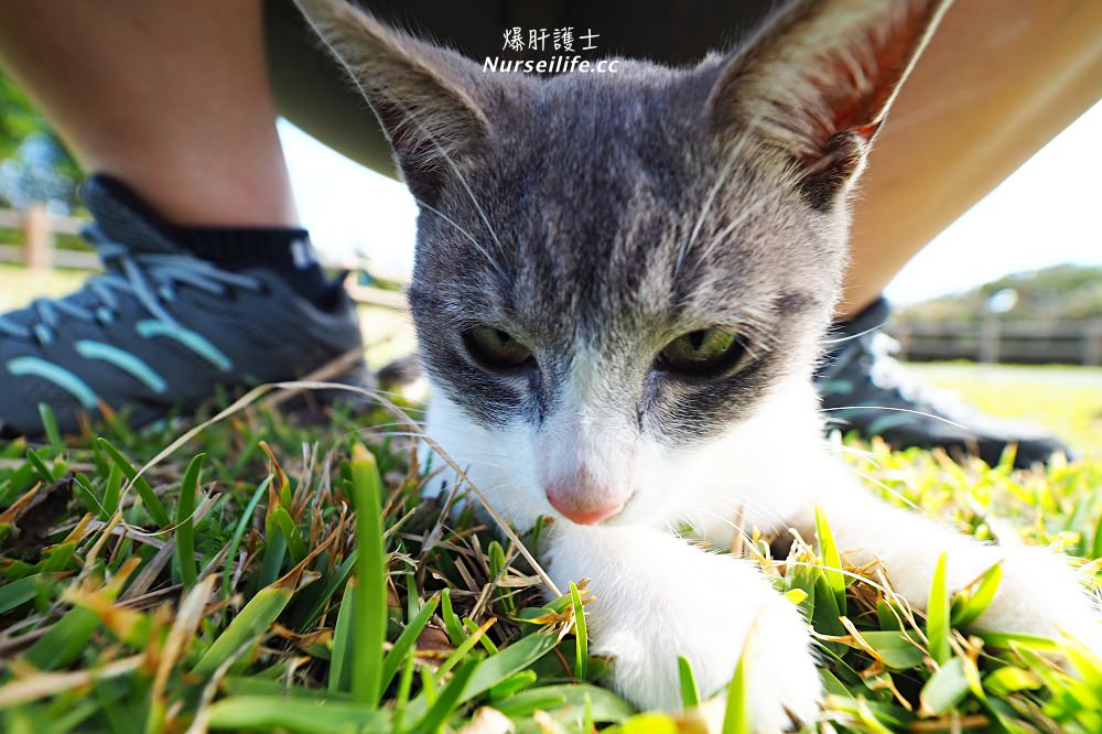 沖繩、久米島|黒石の森.貓奴秘境 - nurseilife.cc