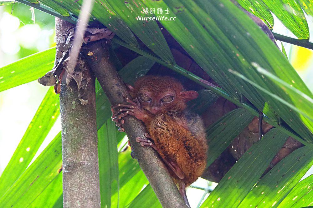薄荷島一日遊:眼鏡猴、巧克力山、高空挫賽腳踏車 Bohol Chocolate Hills Adventure Park - nurseilife.cc