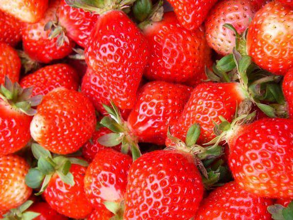 雪霸草莓園–上山採草莓