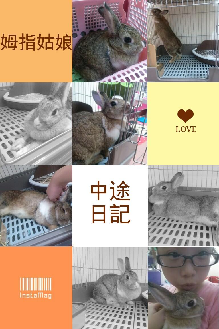 (中途褓姆日記)關於兔子的兩三事-拇指姑娘初次見面❤