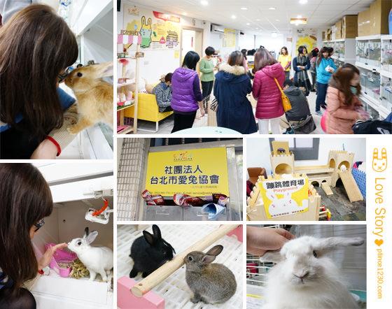 (Life)愛心.用心.兔孩子的避風港-台北市愛兔協會喬遷之喜❤