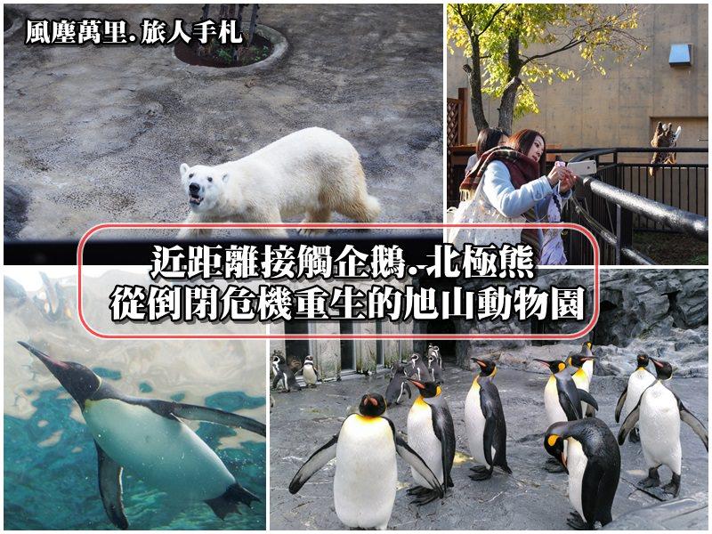 【北海道旭川景點】適合親子同樂的旭山動物園 近距離觀賞北極熊與企鵝