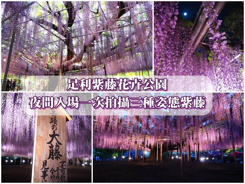 【足利紫藤】足利花卉公園夜間入場 一次拍到三種紫藤姿態 附交通攻略