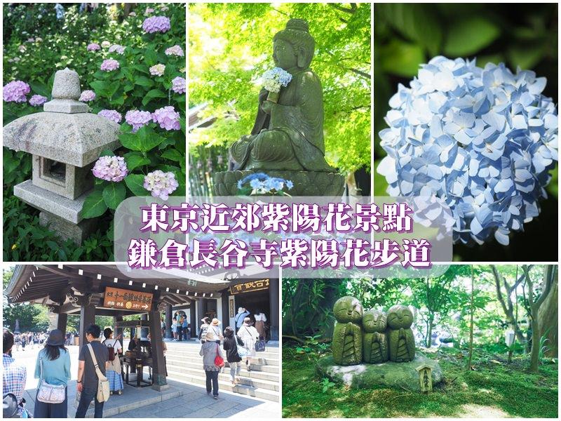 【鎌倉景點】長谷寺紫陽花散步道賞花去 六月中去最佳