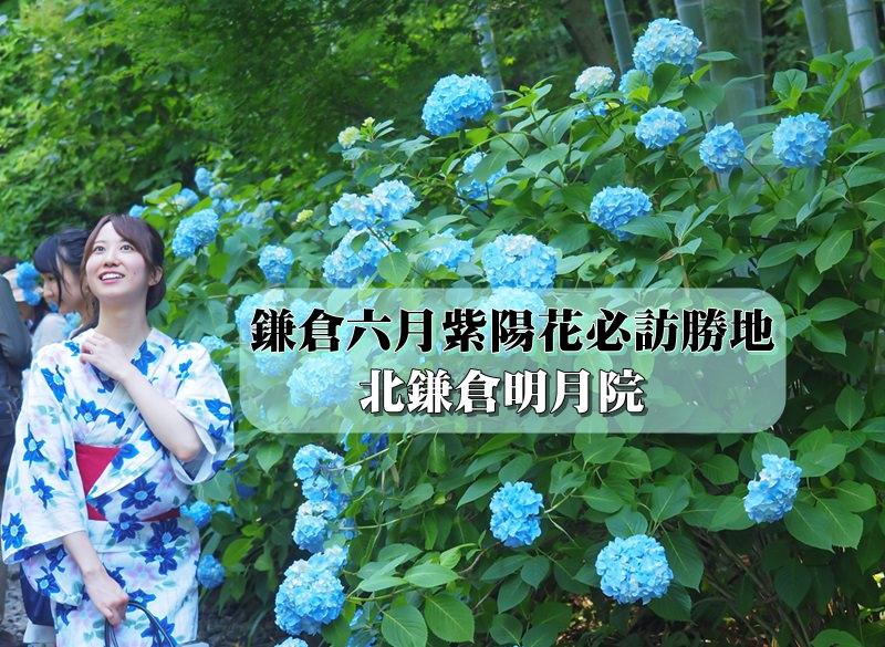 【鎌倉景點】北鎌倉明月院與紫陽花相逢盛開之時