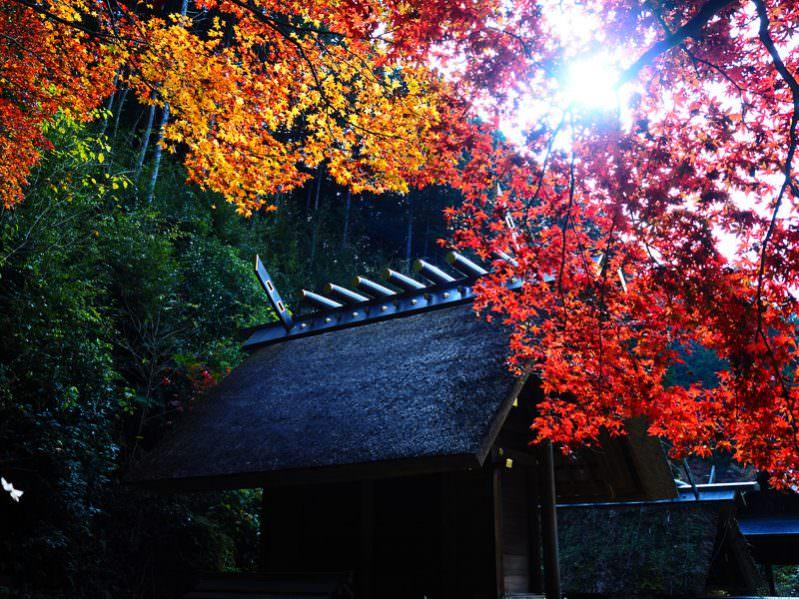 京都穴場之楓紅交會的日向大神宮   2016(秋)海之京都賞楓行