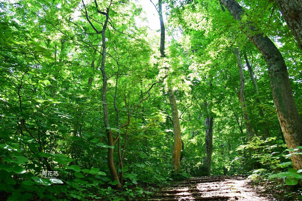 【日本遊記】東北青森縣.白神山地森林步道 前進世界自然遺產!夏天遊山散策
