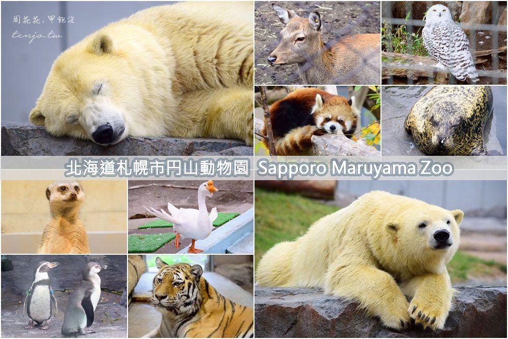 【北海道遊記】札幌市圓山動物園 超萌明星北極熊!交通方式、必買商品、園區設施總整理