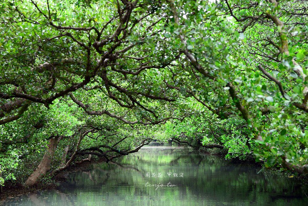 【台南遊記】四草綠色隧道 台版亞馬遜森林!戴斗笠搭竹筏體驗紅樹林生態之美