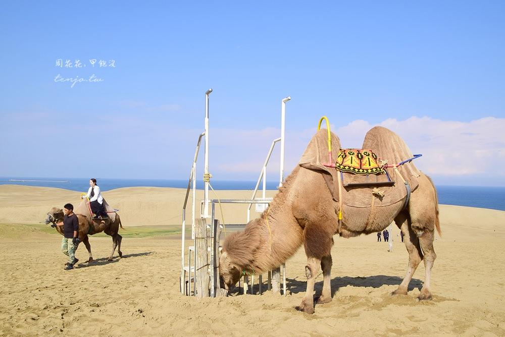 【山陰鳥取景點】鳥取砂丘 日本最大沙場絕景!前往交通方式、周邊旅遊資訊總整理